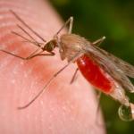 малярия. профилактика малярии